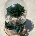 green forever rose