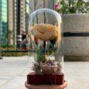 Beige forever rose